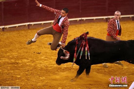 材料图:当地时间2019年4月13日,葡萄牙里斯本坎普佩克诺斗牛场上演危险安慰的斗牛竞赛,一名斗牛士在化妆时不慎被恼怒的公牛顶翻在地,现场一片混乱。